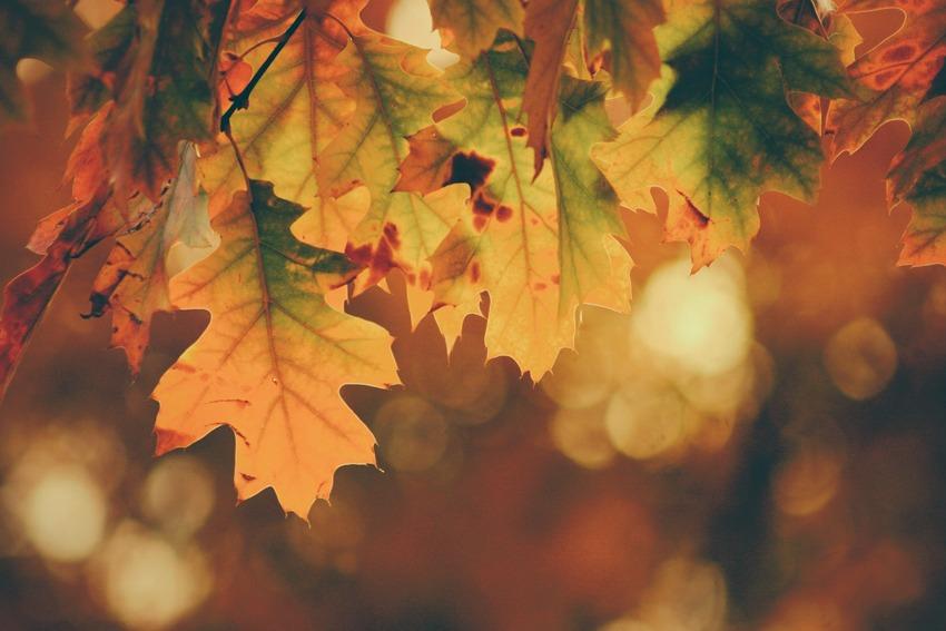 پاییز زیباـ2